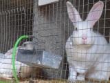 獭兔养殖基地山东天合特种养殖