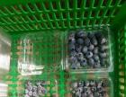 富硒有机蓝莓园 蘑菇园
