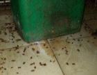 温州灭蟑螂、灭老鼠、灭四害除甲醛除味,铭飞来帮您!