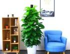 植物养护 植物销售 植物出租 植物租赁