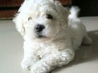 苏州宠物狗领养中心 只需身份证实名领养
