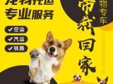 威海可空运可陆运初见宠物托运公司