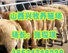 山西西门塔尔肉牛育肥技术大全