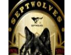 七匹狼啤酒 七匹狼啤酒加盟招商