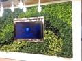 环保植物墙加盟代理