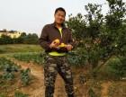 武汉周边生态园采摘团建,春季农家乐拓展游戏,踏青户外团建拓展