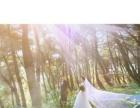 森林里,斑驳的阳光 穿着婚纱的你,是我心中较美的画