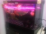 自己制作龙鱼治疗缸低价处理了,全部滤材和器材