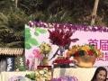 花艺合作,婚礼花艺、活动花艺、软装花艺。