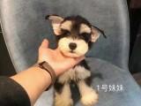 池州哈士奇幼犬狗狗出售 包纯种 包健康