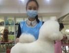 宁波营业中宠医zhuan