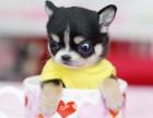 杭州那里有串串犬卖 杭州串串犬价格 杭州串串犬多少钱