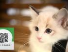 东莞在哪里卖健康纯种宠物猫 东莞哪里出售布偶猫