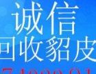 滨州回收貂皮服装,诚信