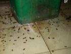 郑州金水区郑州酒店灭鼠郑州商场灭鼠郑州商场防鼠