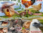 道地宣化区外卖正宗农家散养土鸡,比市场养殖还便宜