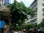 幸福 幸福祥苑中路 商业街卖场