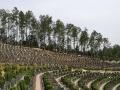 福州性价比高陵园-天堂陵园-天境陵园优惠价免费带看