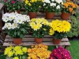 植物出租 植物銷售 植物租賃 植物出擺