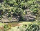 马龙130亩林地+耕地低价转让