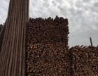 雄安新区园林绿化支撑竹竿 杉木杆厂家联系电话