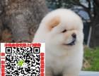 徐州松狮图片价格 松狮幼犬宠物狗养殖基地 松狮领养赠送