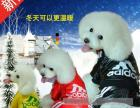 蚌埠淘宝商城装修代运营产品拍摄直通车推广
