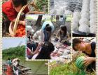 上海农家乐一日游推荐 游滴水湖看海 吃土菜 采葡萄掰玉米