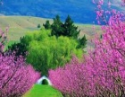合肥到新西兰旅游报价_新西兰8日旅游