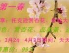杏 福第一春· 花 开托克逊:托克逊杏花一日游