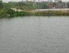 安徽省黄山3亩水域转让