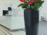 天津绿植租赁花卉租摆办公室绿植租赁养护服务公司