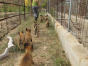 中国较大双血统马犬繁殖基地 可实地考察