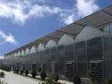 陽光板溫室 金坤陽光板溫室專業造價 陽光板溫室設計