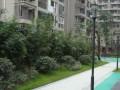 金水湾小区靠近地铁站135平方三室两厅两卫两阳台出租