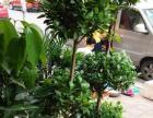 优价出售各种室内盆栽盆景植物东方女子医院对面