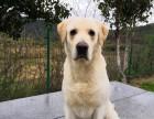 福州宠物犬 工作犬培训学校