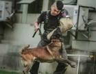 宠物工作犬训练