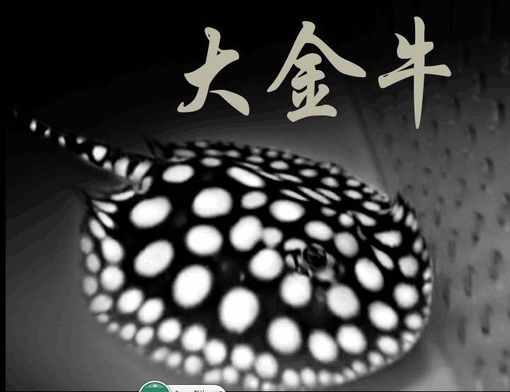 皇冠黑白魟鱼 大小鱼的批发零售,**皇冠黑白魟鱼,正品保证
