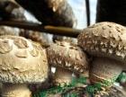 白云山深山香菇无腿肉厚纯净无污染