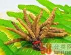 武汉市回收冬虫夏草 产地青藏川二至五条一克同仁堂或其它品牌
