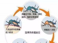 专业灭蟑螂、老鼠、白蚁蚂蚁、蚊蝇、臭虫等有害生物