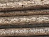 廊坊 北京 天津绿化木杆