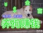 养殖肉狗半年利润翻一倍