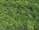 410余亩成材杜仲林(内含3000平米鸡舍)