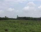 开平周边 赤水镇 农业用地 50亩 450元亩
