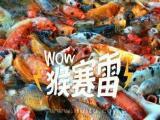 长期出售各种花色锦鲤
