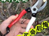 批发台湾高品质园艺工具花卉修枝剪园艺工具粗枝剪省力剪果树枝剪