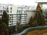 广州越秀龙鱼缸清洗消毒 别墅鱼池护理换水 免费上门