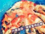批发赤峰市观赏鱼